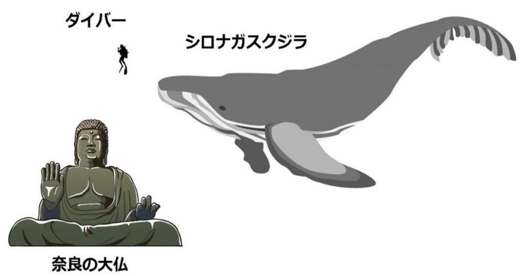 「体長30mのクジラ、ピンと来ない」分かりやすい例え方が話題に