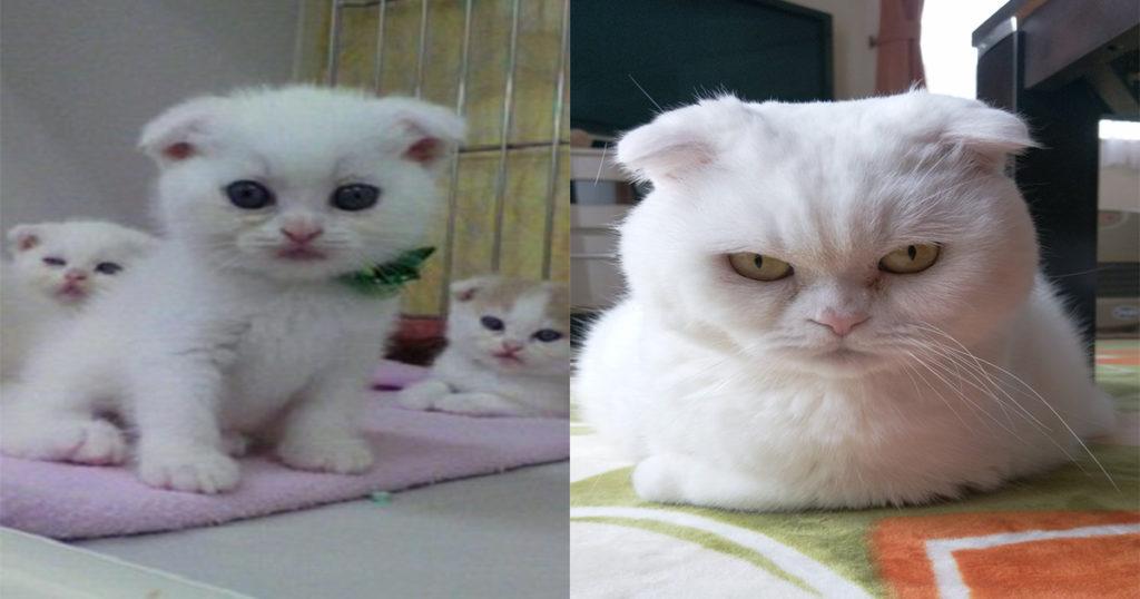 ギャップがすごい!「子猫が成長した画像」がツイッター上で話題に厳選10選