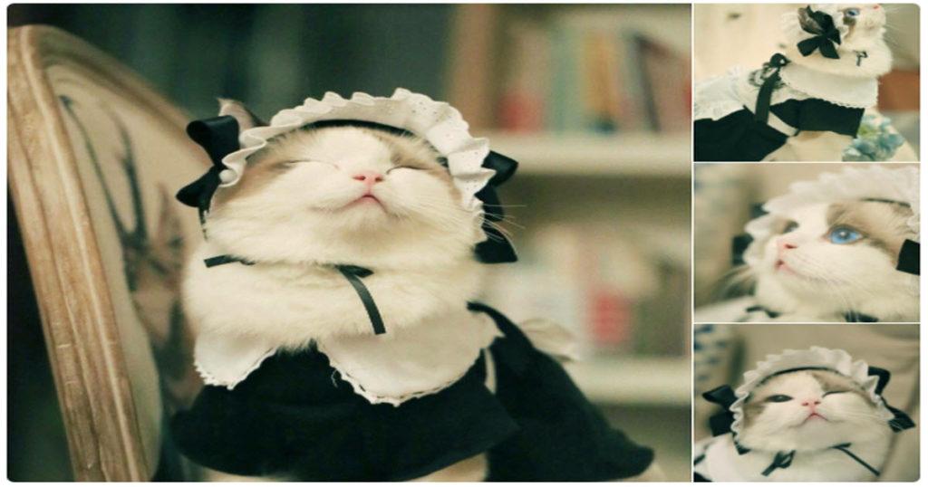 「メイド姿の猫が可愛すぎる」メロメロになっている人続出
