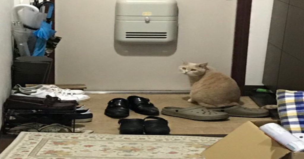 猫がドアの前で何かを待っている・・・待ち続ける理由に飼い主が泣いた
