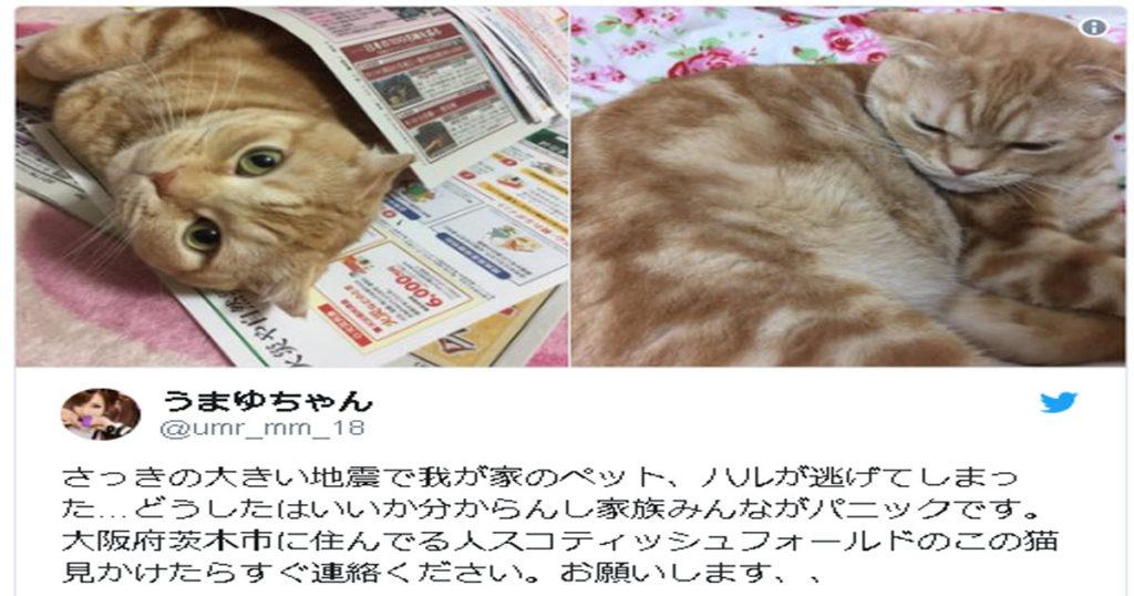 「大きな地震で猫が逃げてしまった・・・」大阪地震で猫の脱走が相次ぐ、逃げ出す前の対策方法