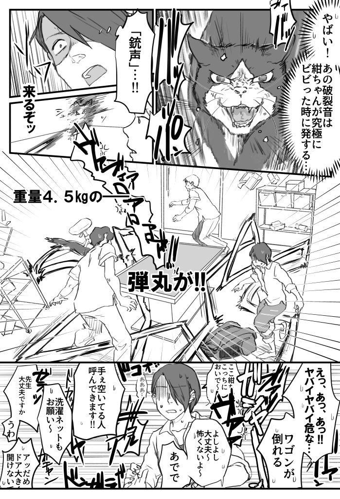 ビビリ猫の紺ちゃん画像3