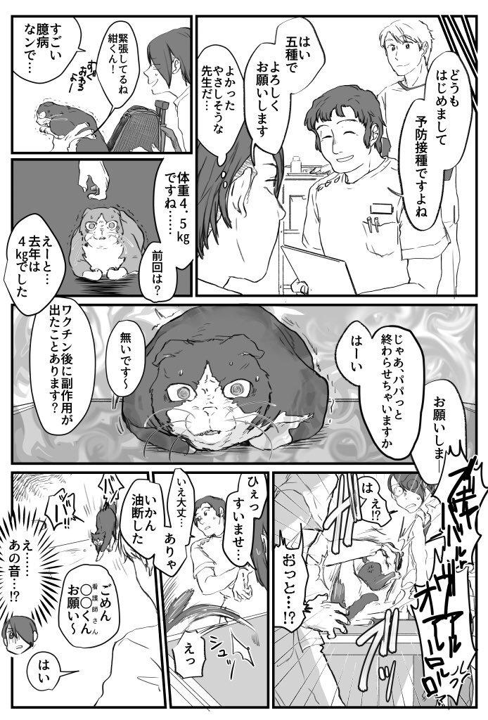 ビビリ猫の紺ちゃん画像2