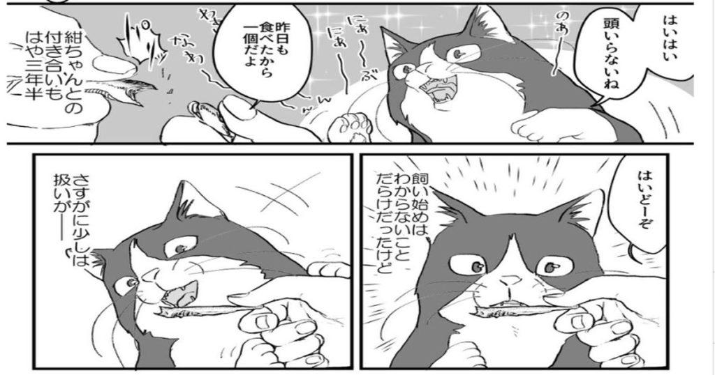 「超ビビリな猫の紺ちゃん⑤」さすがにビビリ癖が治ったと思った矢先の行動が怖すぎる