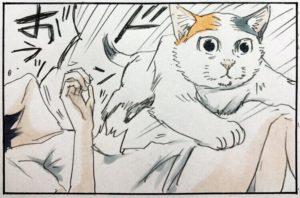 【マンガ】「超ビビリな猫の紺ちゃん⑥」猫が寝ているロフトに入っただけでこの反応はやばい