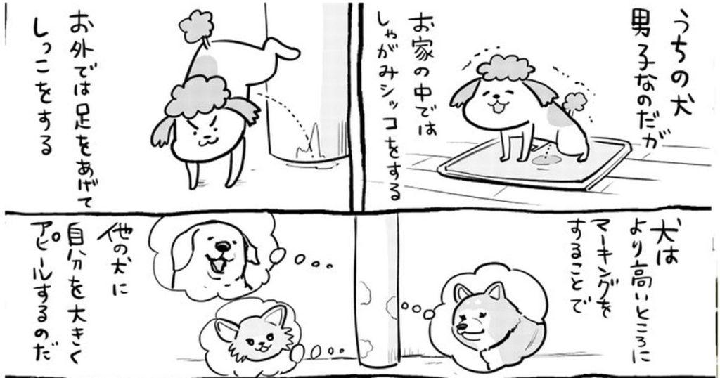 犬と猫どっちも飼ってると、トイレの成長ぶりが凄すぎて笑いが止まらない