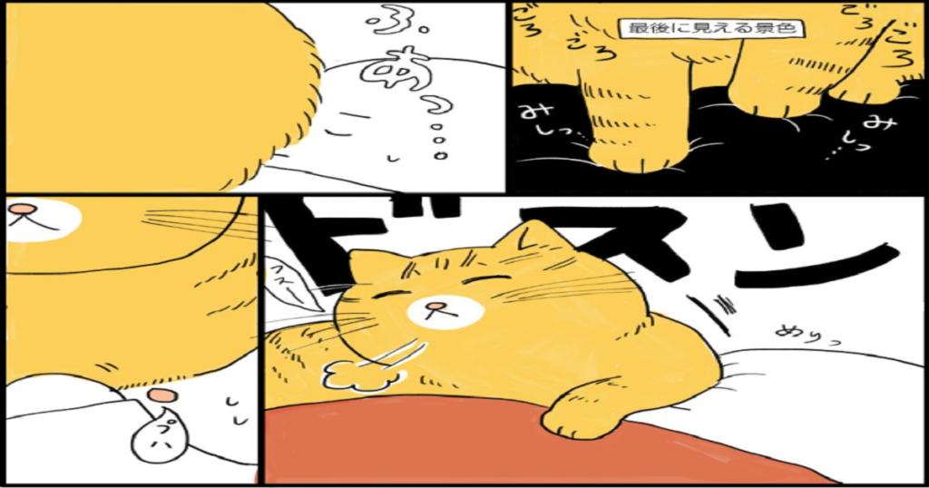 ウチの猫の寝方があまりにも特殊すぎるので見てください