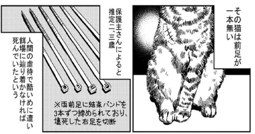 3本足の猫がうちの子になるまでのお話