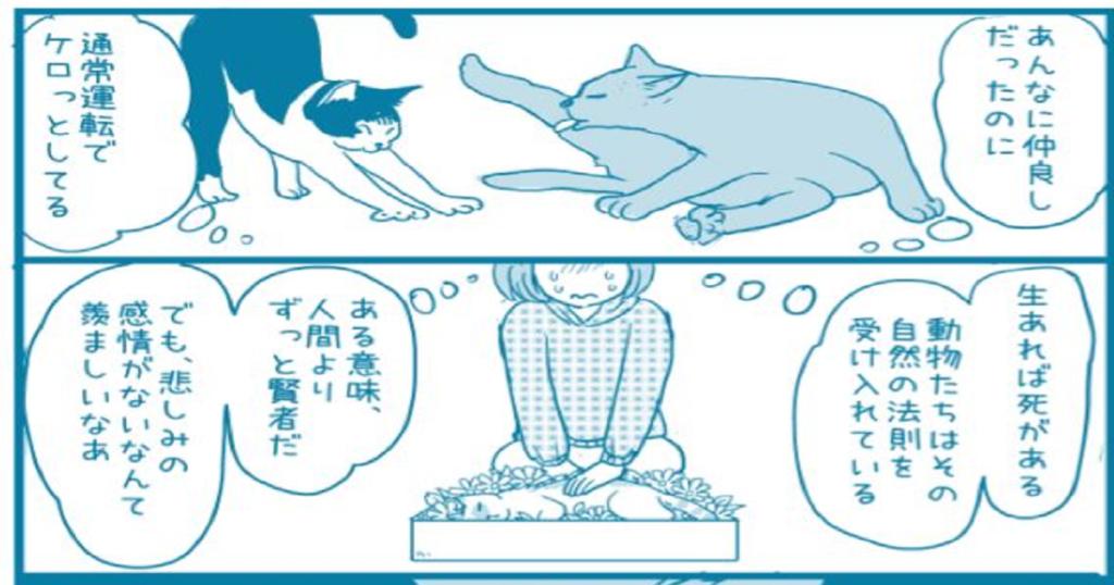 猫はクールで非情な動物・・・パートナーが死んだときの猫の反応に涙があふれた
