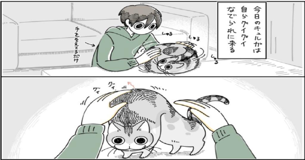 グイグイくるネコ